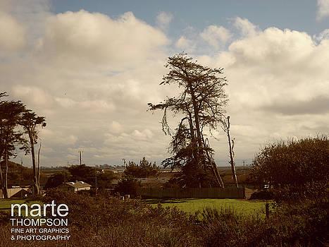 Moss Landing Tree by Marte Thompson