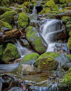 Mossy Creek by Jon Vemo