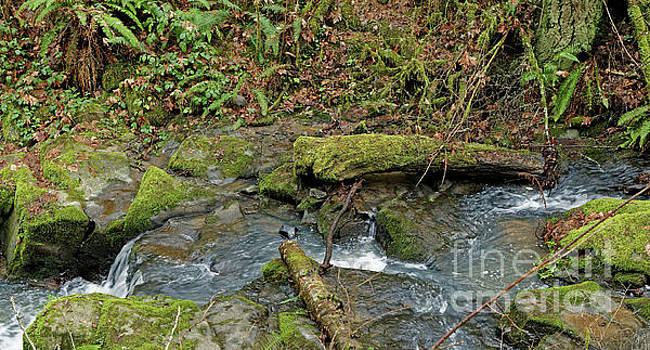 Mossy Stone in a Mountain Stream by Natural Focal Point Photography