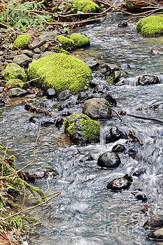 Mossy Stones in a Pacific Northwestern Stream by Natural Focal Point Photography