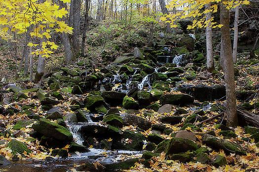 Mossy stream by Angela King-Jones