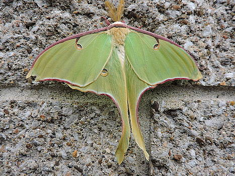 Moth by Abagail Wells