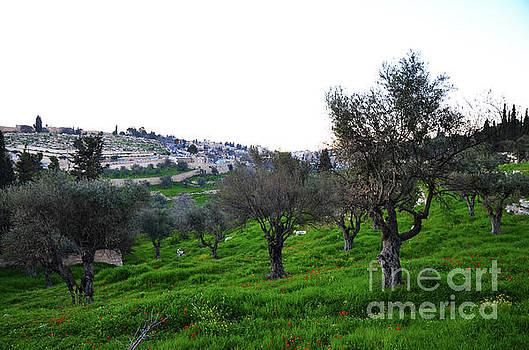Mount Of Olives Jerusalem 2 by Del Art
