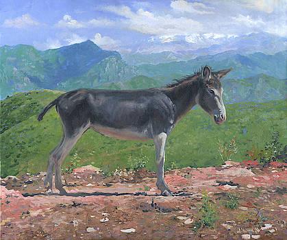 Mountain Donkey  by Denis Chernov