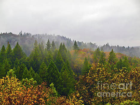 Mountain forest in Shasta County, California RANCH005 by Howard Stapleton