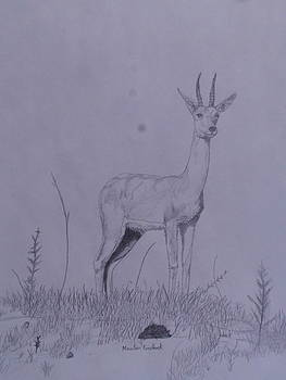 Mountain Reedbuck by Michael Hoback