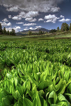 Mountain wetland by Mark Langford
