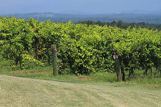 Cathy Lindsey - Mountains, Posts and Vineyard Rows 2018c