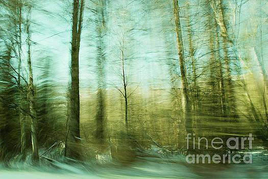 Moved By Trees by Illumina Photographics