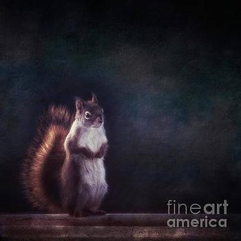 Mr. Squirrel by Priska Wettstein