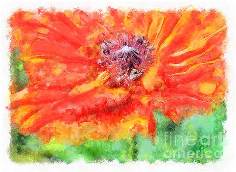 Tina Lavoie - Ms. Poppy abstract impressionist floral art