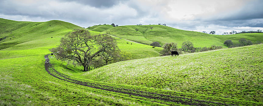 Mt. Diablo Spring Hillside by Scott McGuire