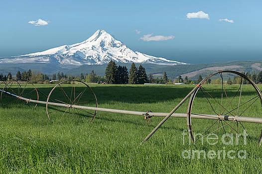 Mt. Hood Splendor by Sandra Bronstein