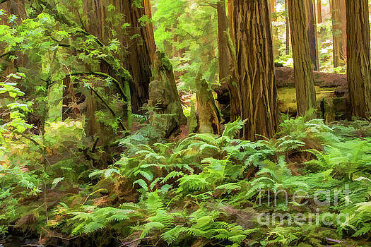 Lisa Lemmons-Powers - Muir Woods Ferns and Redwoods