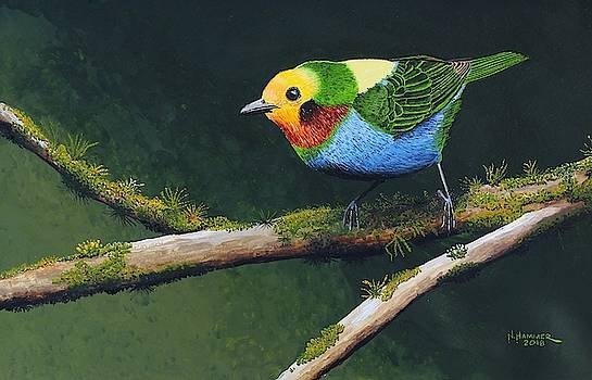 Multi-colored Tanager by Nelson Hammer