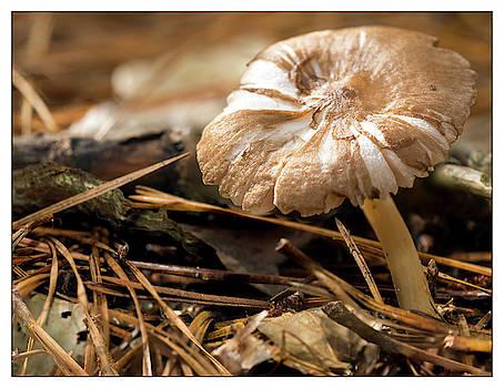Mushroom Close Up by Lu Prescott