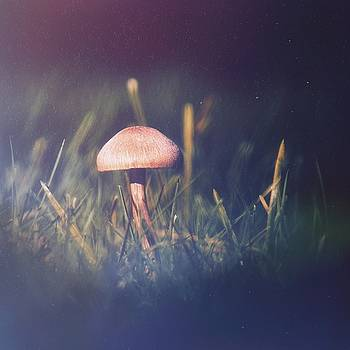 Mushroom Night by Jaroslav Buna