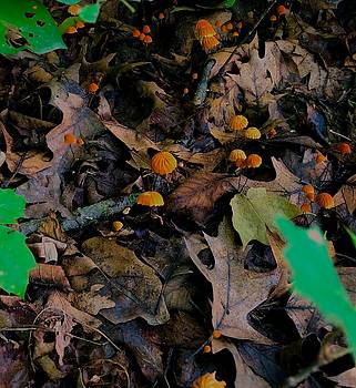 Mushrooms and Leaf Litter by Lukas Miller