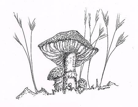 Mushrooms by Dan Twyman