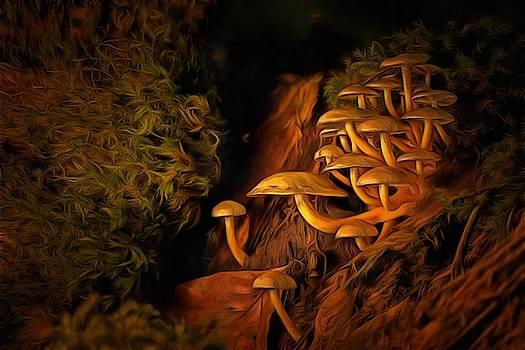 Mushrooms by Harry Warrick