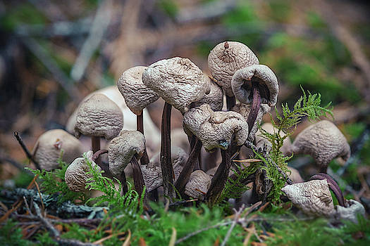 Mushrooms by Nicole Young
