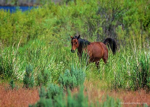 Mustang at Washoe Lake by LeeAnn McLaneGoetz McLaneGoetzStudioLLCcom