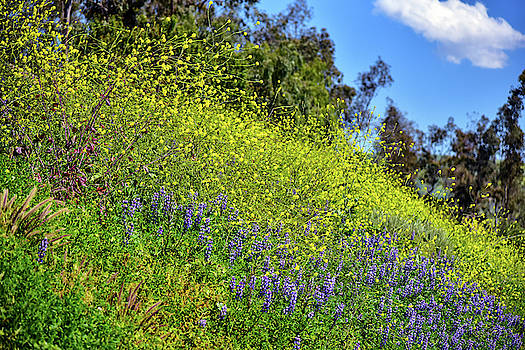 Mustard and Lupines 2 by Linda Brody
