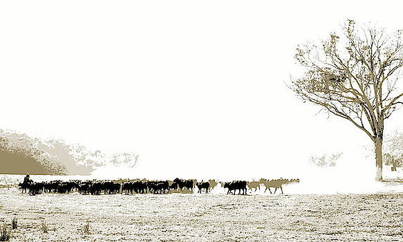 Mustering Cattle in the High Country by Lexa Harpell