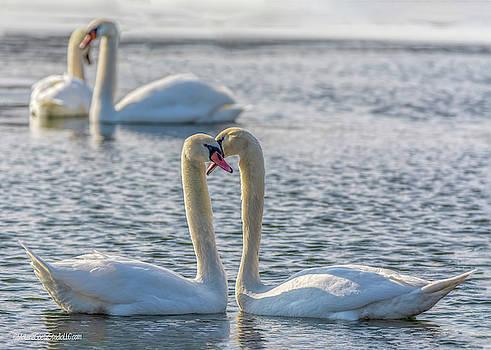 Mute Swans in Love by LeeAnn McLaneGoetz McLaneGoetzStudioLLCcom