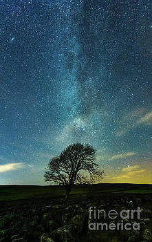 MW tail above the lonely tree by Mariusz Talarek
