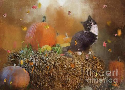 My Autumn Kitty by Kelley Freel-Ebner