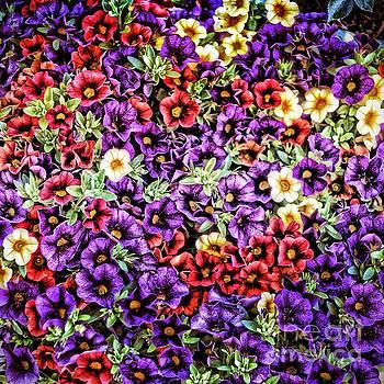 My beautiful Flowers by Phyllis Kaltenbach