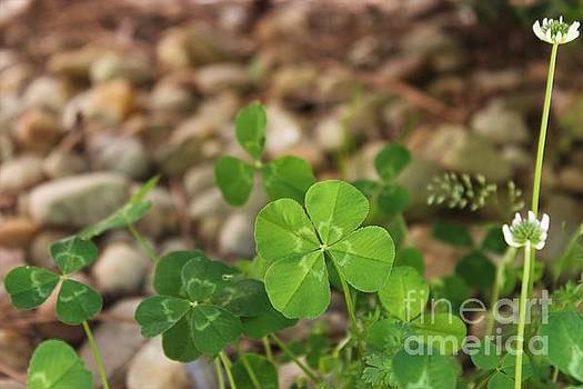 My Lucky Day by Angela Stafford