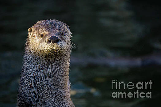 My Otter Love by Linda Howes