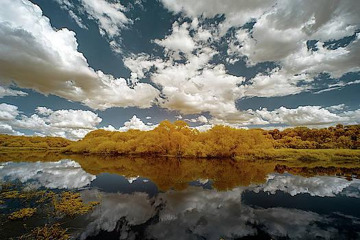 Myakka State Park in Florida  by Jon Glaser