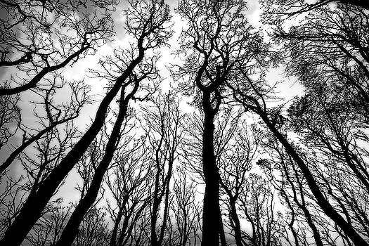 Daniel Hagerman - MYSTERIOUS LEAFLESS FOREST