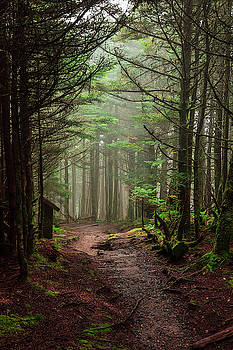 Mystic Forest by Kelly Kennon