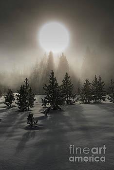 Mystical  by Sandra Bronstein