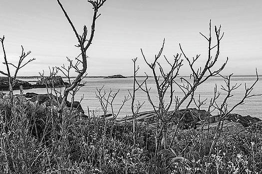 Toby McGuire - Nahant MA Egg Rock through the Trees Black and White