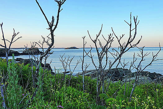 Toby McGuire - Nahant MA Egg Rock through the Trees
