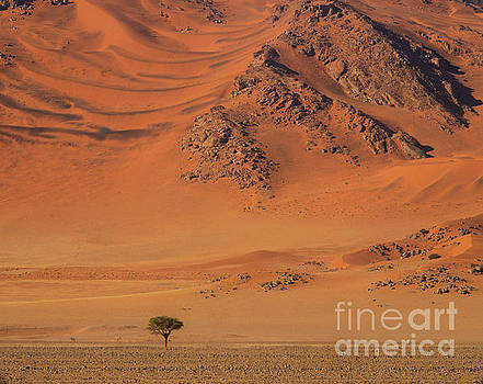 Namibia Tree and Exposed Dunes by Mike Reid