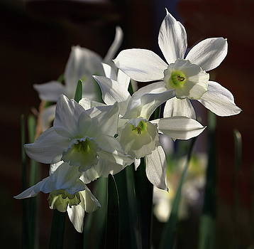 Narcissus In The Sunlight by Jeff Townsend