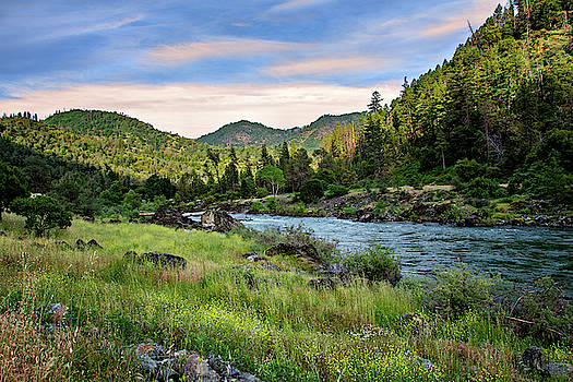 National Forest by Maria Coulson