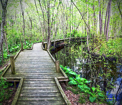 Nature Trail Boardwalk by Brian Wallace