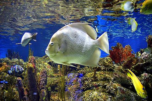 Nature Underwater  by Cynthia Guinn