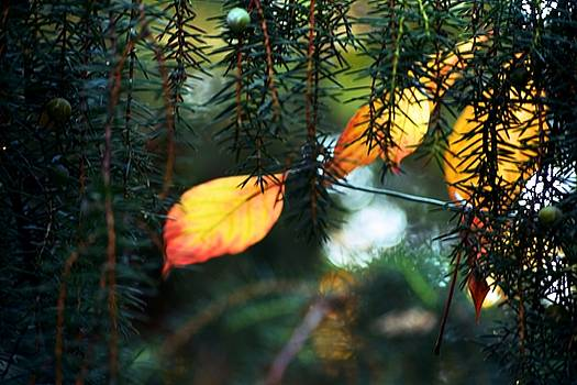 Nature's glow by Valerie Dauce