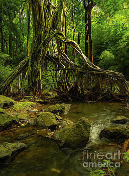 Asia Visions Photography - Natures Water Filter