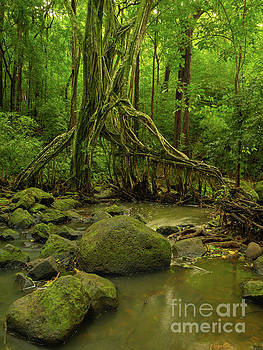 Asia Visions Photography - Natures Water Filter II