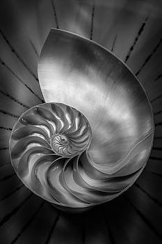 Mike Penney - nautilus Shell 14
