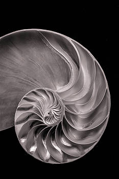 Mike Penney - Nautilus Shell 4